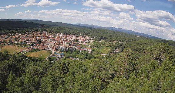Pinares alrededor de Navaleno.