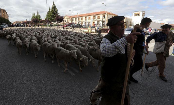 Foto 2 - Cencerros de la Trashumancia en la capital. Oveja que bala, bocado que pierde