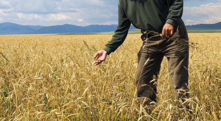 Foto 1 - Un estudio aboga por márgenes más anchos para proteger los cereales de malas hierbas