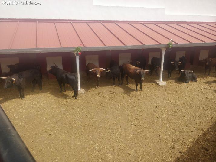 Nuevos baños en la plaza de toros. SN