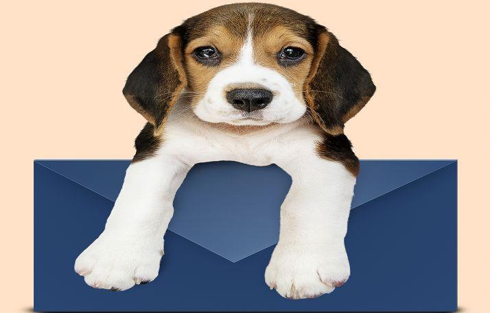 """Foto 1 - Correos propone a sus empleados que lleven sus mascotas al trabajo el viernes """"para aliviar la soledad, la depresión y el estrés"""""""