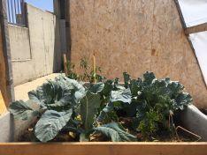 Foto 2 - VÍDEO: Los alumnos del Pico Frentes desarrollan un invernadero pasivo para huertos escolares