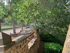 Foto 3 - El vendaval de esta tarde en Soria se salda con daños en árboles