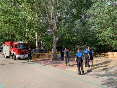 Foto 4 - El vendaval de esta tarde en Soria se salda con daños en árboles