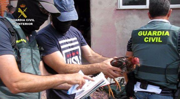Una de las aves incautadas en el operativo. /GC