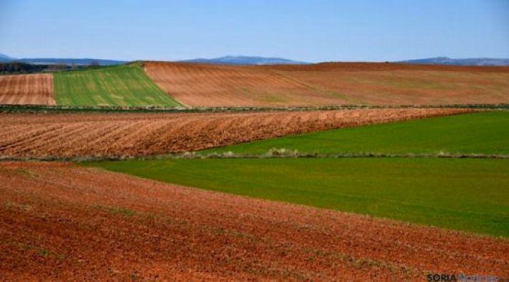 Foto 1 - Culmina la concentración parcelaria de Zayuelas II, en Fuentearmegil