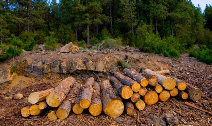 Foto 1 - Santa María de las Hoyas licita madera por 34.300 euros