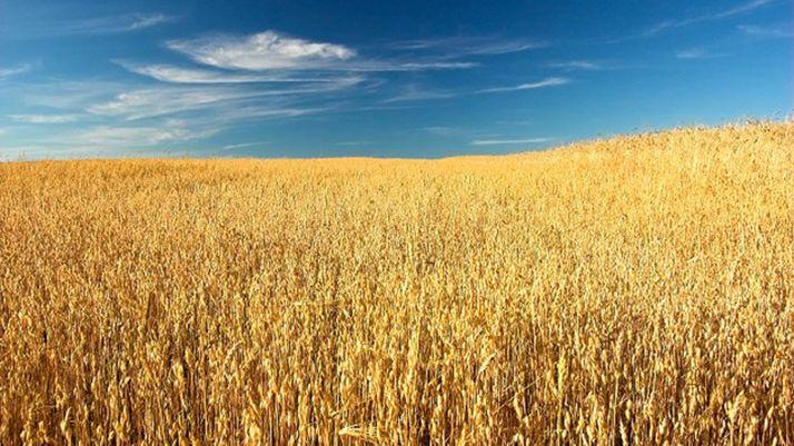 Foto 1 - Itacyl y Cetece colaboran en proyectos para la mejora del sector de transformación de cereales