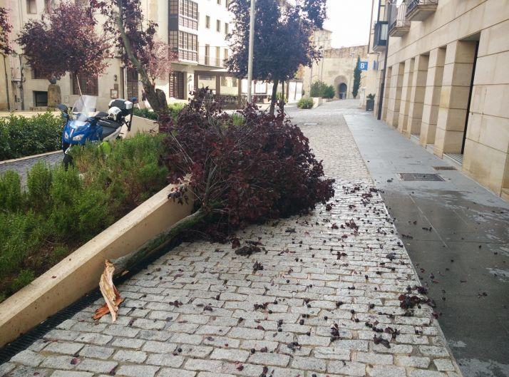 El árbol quebrado en El Vergel. /Ayto.