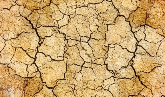 Foto 1 - Más de 600.000 hectáreas de herbáceos CyL están afectadas por la sequía