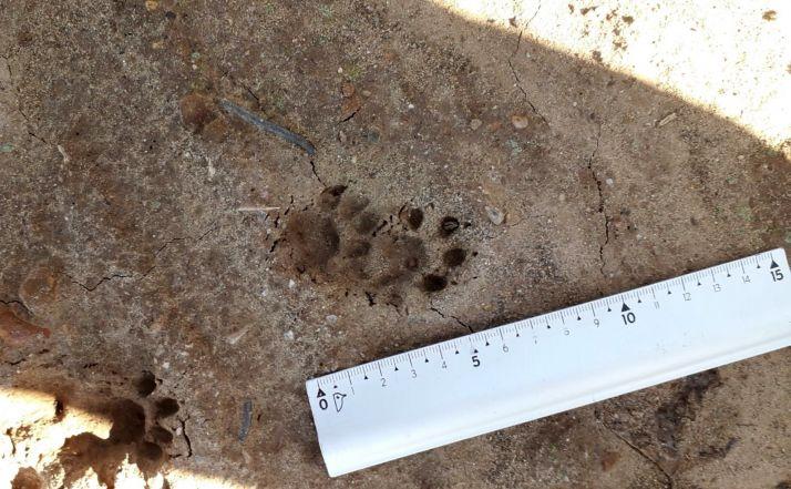 Foto 1 - Este viernes, charla sobre rastreo de animales en Madruédano
