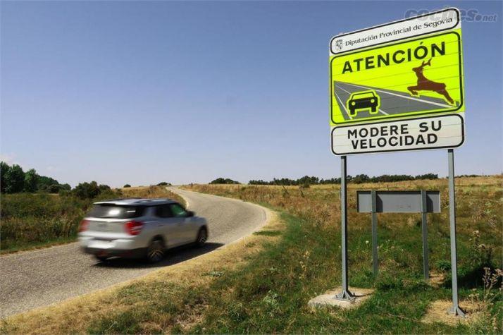 Foto 1 - Los animales provocan más de 3 accidentes al día en las carreteras sorianas