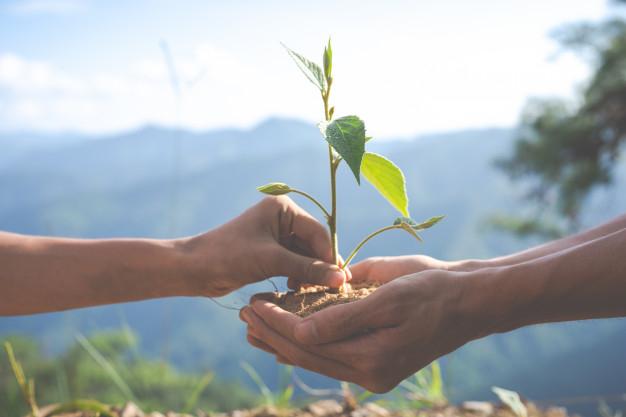 Foto 1 - Publicado el presupuesto de las ayudas forestales del Programa de Desarrollo Rural
