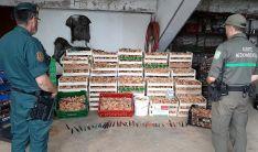Una imagen de los níscalos decomisados en Matas de Lubia. /Jta.