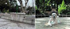 2016 El `abrevadero´ de la Dehesa pasó de ser un espacio oscuro a un homenaje a los trashumantes con la eliminación de la fuente y el vallado y su sustitución por un perro gaudiano. fotos: sn/sn