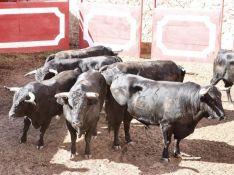 Foto 4 - Orden de Lidia de la corrida de rejones