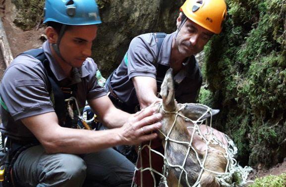 El animal con los agentes medioambientales tras el rescate. /noticiasburgos.es