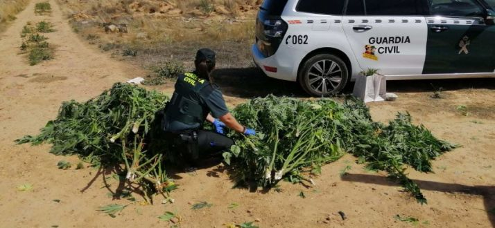 Marihuana en Almazán. Guardia civil.