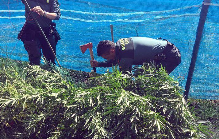 Agentes de la Guardia Civil en la plantación. /Subdelegación