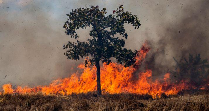 Se intensifica el riesgo de incendios.
