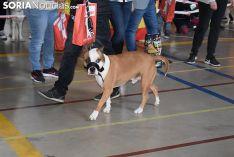 Foto 9 - Galería de imágenes: los perros Thay, Owen y Toby son los más guapos de Soria