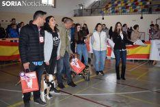 Foto 8 - Galería de imágenes: los perros Thay, Owen y Toby son los más guapos de Soria
