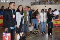 Foto 7 - Galería de imágenes: los perros Thay, Owen y Toby son los más guapos de Soria