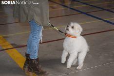 Foto 5 - Galería de imágenes: los perros Thay, Owen y Toby son los más guapos de Soria