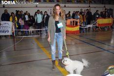 Foto 4 - Galería de imágenes: los perros Thay, Owen y Toby son los más guapos de Soria