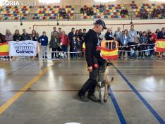 I Concurso 'El perro más guapo de Soria'.