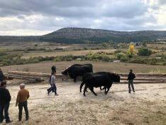 Foto 6 - La gastronomía y la tradición carretera vuelven a darse la mano gracias a la Serrana Negra