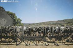 Granja de los Hermanos Vallejo en San Pedro. Carmen de Vicente