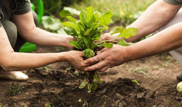 Foto 1 - La convocatoria de ayudas agroambientales y de agricultura ecológica suma 17,5 M€