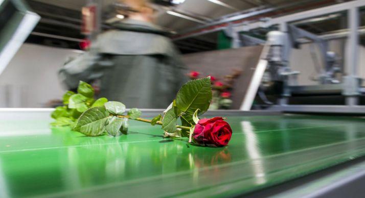 Una flor en el proceso productivo de la planta garreña.