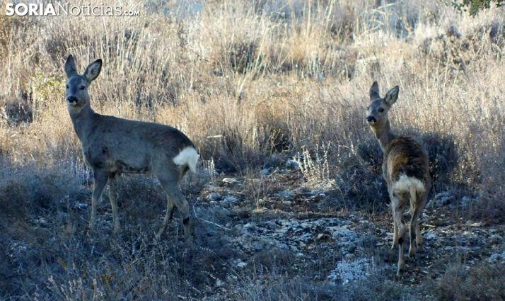 Foto 1 - El TSJ rechaza, de nuevo, que la Junta desista en su recurso contra la suspensión cautelar de la caza