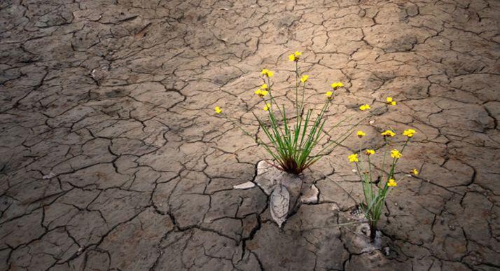 Foto 1 - Una docena de entidades financieras ofrecerán préstamos subvencionados por sequía en CyL