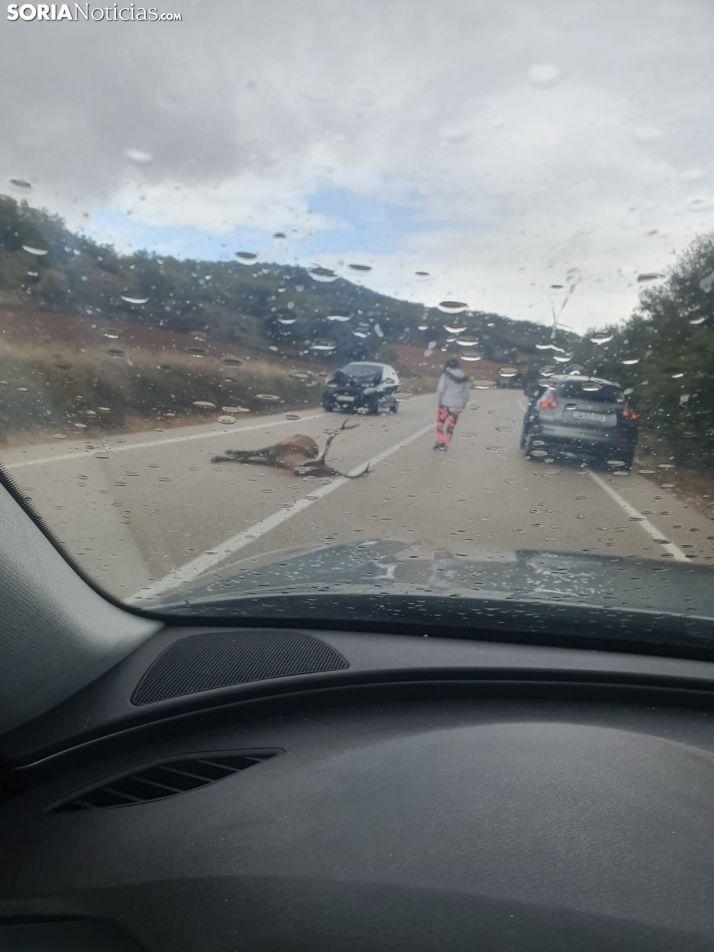 Foto 1 - Atropello de un ciervo entre Alentisque y Valtueña