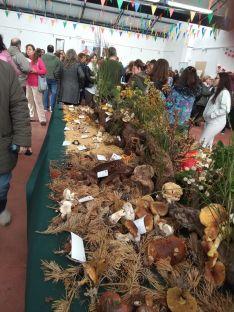 Borobia cierra hoy sus jornadas micológicas 2019.