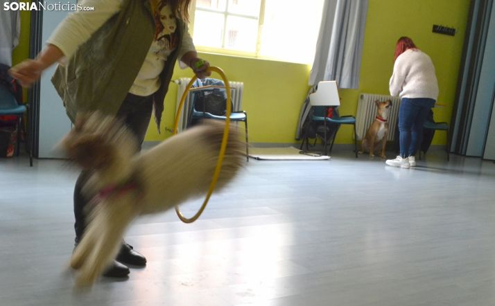 Una imagen del monográfico canino este sábado. /SN