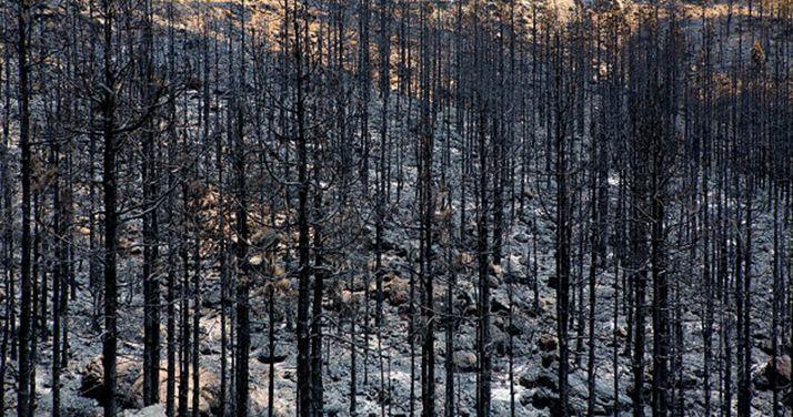 Foto 1 - La superficie quemada en España durante 2018 supuso el 7,20% del total de la UE