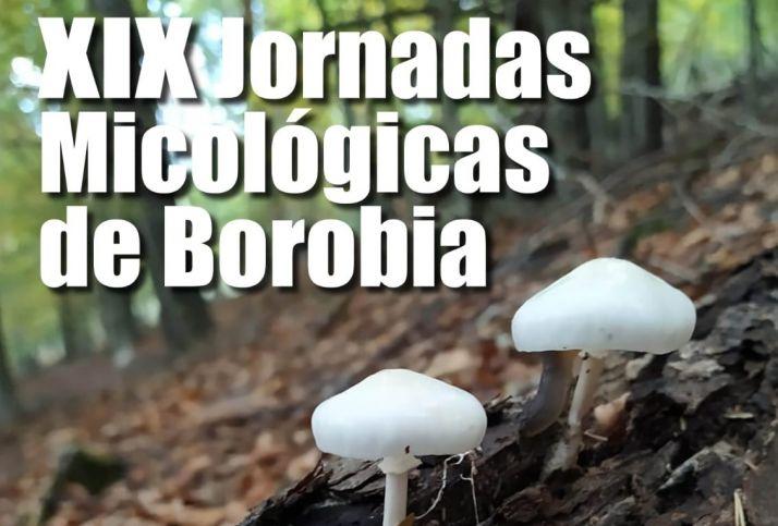Foto 1 - Borobia celebra este puente sus Jornadas Micológicas