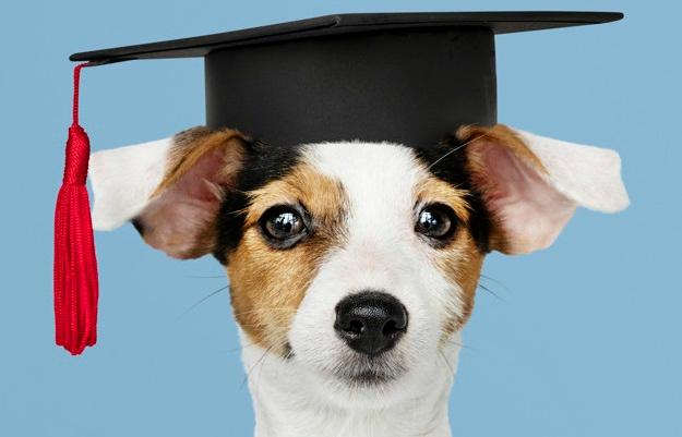 Foto 1 - Curso de educación canina en Soria