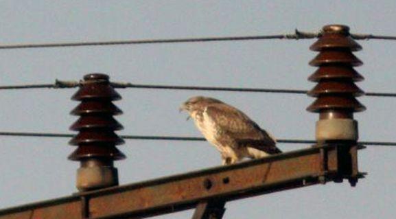 Una rapaz en un poste eléctrico