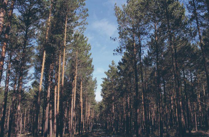 Más de 140.000 hectáreas de bosque cuentan con la certificación de gestión forestal sostenible PEFC.