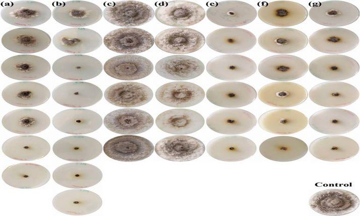 Resultados obtenidos para 'N. parvum', uno de los patógenos más comunes de la madera de la vid, con los distintos tratamientos aplicados.