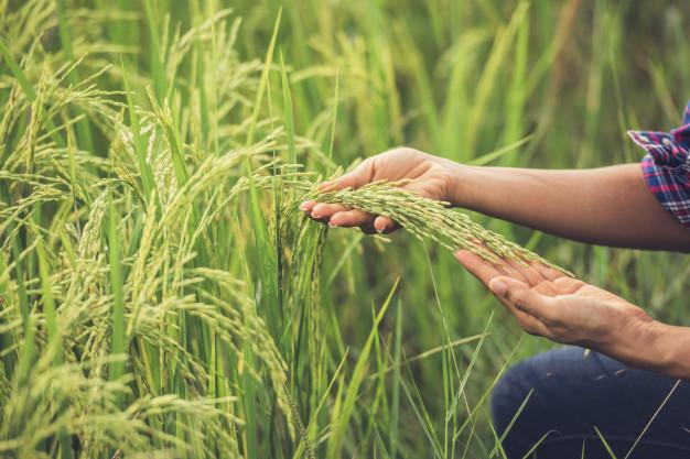 La Consejería ha invertido 47,4 millones de euros para facilitar la incorporación de 882 jóvenes al sector agrario en 2019
