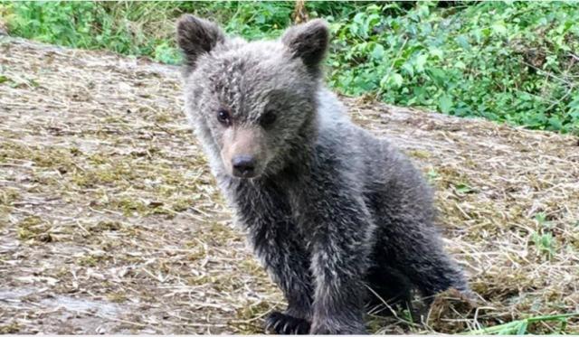 Una imagen de la cría de oso.