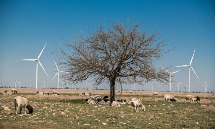 Foto 1 - Siemens-Gamesa recibe un préstamo de 175 M€ para activos renovables