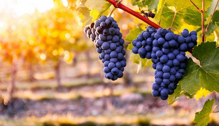 Foto 1 - Tierra de Sabor exhibirá en Barcelona Wine Week la calidad del sector vitivinícola de la Comunidad