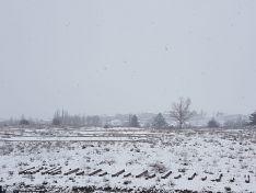 Foto 8 - Galería: La nevada, mejor desde casa